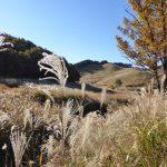 ススキを観に砥峰高原へツーリングに行ってきました!(NMAX155)